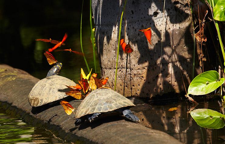 Amazon Trip – Macaw Clay Lick Chuncho 2 Days .